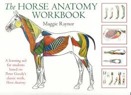 Saunders Beautiful Veterinary Anatomy Coloring Book