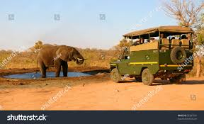 100 Safari Truck Elephant Stock Photo Edit Now 25287331 Shutterstock
