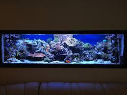 aquarium dans le mur recifal fabrication re a led l éclairage