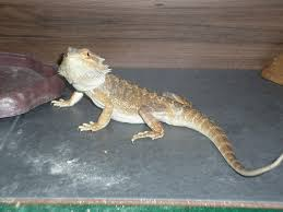 is this suitable for a bearded page 2 reptile forums