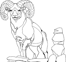 Goat Coloring Pages 3