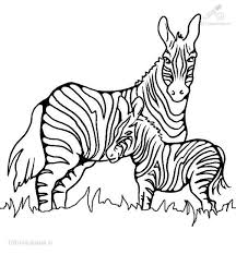 Zebra Pictures To Print Website Inspiration Printable Coloring Pages
