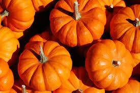 Pumpkin Pie Blizzard by Has America Finally Hit U0027peak Pumpkin U0027