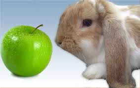 Can Rabbits Eat Roasted Pumpkin Seeds by 100 Can Rabbits Eat Salted Pumpkin Seeds Is It Realisticaly
