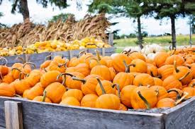 Kent Ohio Pumpkin Patches by 5 Things To Do On Or Before Halloween Her Campus