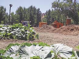 Oak Glen Pumpkin Patch Yucaipa by Council Approves Pumpkin Patch Expansion Local News Newsmirror Net