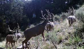 Shed Hunting Southern Utah by Hunting The West News U0026 Info About Hunting Big Game In The