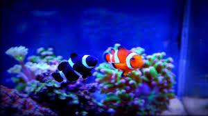 aquarium nano eau de mer nanoaquariums d eau de mer poissons et coraux trucs et