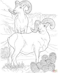 Desert Animals Coloring Pages Free Printable Pictures Online