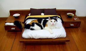 Fancy Cat Beds for Your Fancy Cat D Magazine