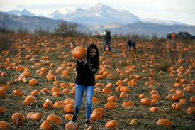 Pumpkin Patches Near Colorado Springs Co by Photos Rock Creek Pumpkin Patch And Corn Maze U2013 The Denver Post