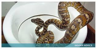 Unclogging Bathtub With Snake by Is Snaking A Clogged Drain The Best Option Diy Plumbing Blog