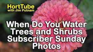 Automatic Christmas Tree Waterer Instructions by When To Water Trees And Shrubs Subscriber Sunday Photos Jc