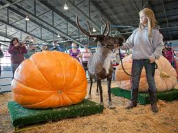 Heaviest Pumpkin Ever by Why Vegetables Get Freakish In The Land Of The Midnight Sun The