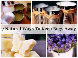 13 Natural Ways To Keep Mosquitoes Away 15 Backyard Tiki Torches Torches Citronella Oil And How To Get Rid Of Mosquitoes Mosquito Magnet The Best Ways To Of Naturally Beat The Bite Backyard Mosquitoes Research 6 Plants Keep Bugs Away Living Spaces Creepy 10 Herbs That Repel Bug Zapper Plant Lemongrass As A Natural Way Keep Away Pure 29 Best Images On Pinterest Weird Yet Effective Pest Hacks Thermacell Repellent Patio Lanternmr9w Home Depot 7 Easy Mquitos Dc Squad