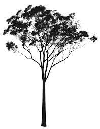 Eucalyptus or Gum Tree Silhouette Australia Rooweb Clipart