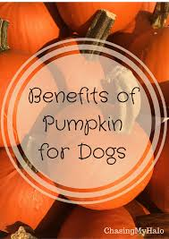Pumpkin Seed Prostate Congestion by Benefits Of Pumpkin How To Read Blood Pressure Readings