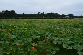 Pumpkin Patch Louisburg Nc by Farm Aid 2014 Making Policy Connections On North Carolina Farms
