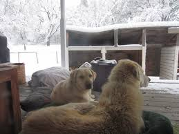 News from Oak Creek Ranch Dogs in the Snow