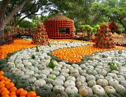 Pumpkin Patch Gainesville Texas by Children U0027s Garden Garden Traveler