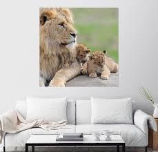 posterlounge wandbild junge löwen premium druck auf fotopapier kaufen otto