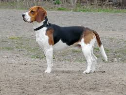 Guard Dogs That Dont Shed by Most Popular Dog Breeds For 2017 U2013 Woof And Whiskers
