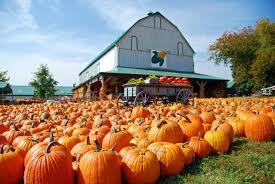 Nearby Pumpkin Patches by Looking For A Pumpkin Farm Oak Creek Wi Patch