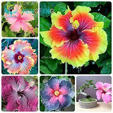 flower plants seeds