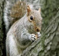 time to plant bulbs and ward evil squirrels wtop