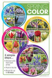 best 25 bulb flowers ideas on flowers garden flower