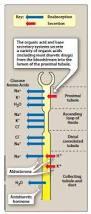 High Ceiling Diuretics Can Cause by Nclex Diuretics Brilliant Nurse Learning U0026 Careers