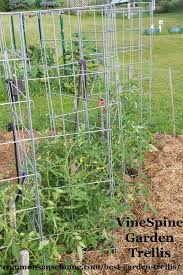 Check Out These Homemade Tomato Trellis Ideas That Are Wind Resistant Tall Short