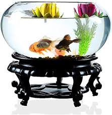 mini aquarium wohnzimmer kreative glas runden aquarium zu