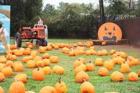 Free Pumpkin Patch In Katy Tx by Fall Pumpkin Patch Kids Out And About Houston