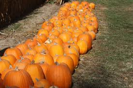 Pumpkin Farms In North Georgia by Fall Bucket List Priebe Pumpkin Patch Crawfordsville In Review