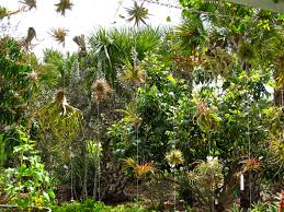Tropical air plants in Naples Botanical Garden
