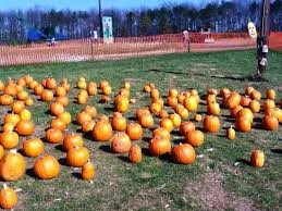 Pittsburgh Area Pumpkin Patches by Jb Tree Farm Corn Maze And Pumpkin Patch Pennsylvania Haunted Houses
