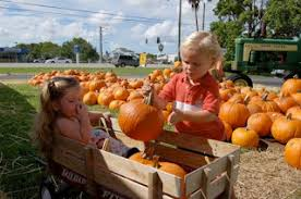 Myers Pumpkin Patch Greeneville by Fort Myers Pumpkin Patch