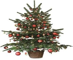 Fraser Christmas Trees Uk by Artificial Christmas Trees English Gardens Best Images