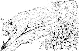 Fresh Ideas Cat Coloring Pages Leopard Colouring Animals