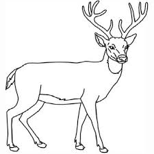 Coloring Pages With Deer