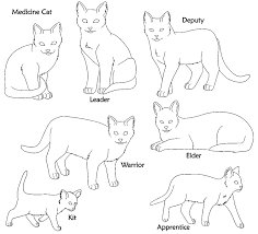 warrior cat names what is your warrior cat name playbuzz