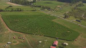 Denver Pumpkin Patch Corn Maze by Mayfield Corn Maze Is Back And Ready For Fall After 2016 Tornado
