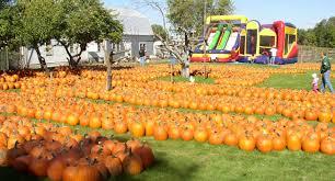 Pumpkin Farms Wisconsin by Meadowbrook Pumpkin Farm In West Bend Wi