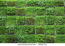 Green Wall Stock Photo 299027111