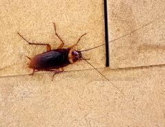 kleine käfer im bad so werden sie die insekten los