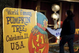 Illinois Pumpkin Patch 2015 by Patch Things Up At The Great Pumpkin Patch