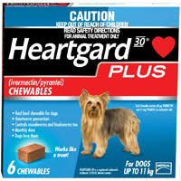 heartgard for cats top five heartworm products in the market canadapetcare
