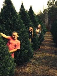 Wadsworth Ohio Christmas Tree Farm by Index