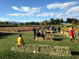 Pumpkin Patch Littleton Co by These Are The 5 Best Pumpkin Patches In Colorado The Denver City